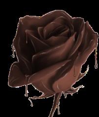 chocolaterose