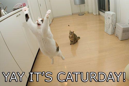 caturday